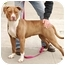 Photo 1 - American Pit Bull Terrier Mix Dog for adoption in Berkeley, California - Jody