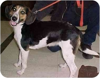 Beagle Mix Dog for adoption in North Judson, Indiana - Charity