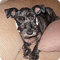 Adopt A Pet :: Marty - Charlotte, NC
