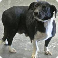 Adopt A Pet :: Smith - Albert Lea, MN