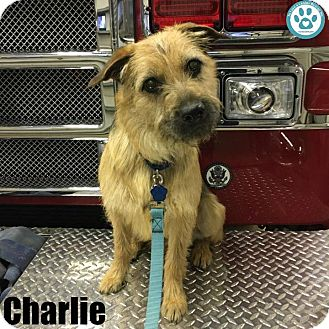 Terrier (Unknown Type, Medium) Mix Puppy for adoption in Kimberton, Pennsylvania - Charlie
