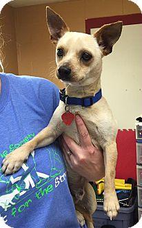 Chihuahua Mix Dog for adoption in Battle Creek, Michigan - Okra