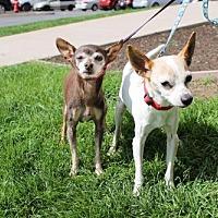 Adopt A Pet :: Isa - Logan, UT
