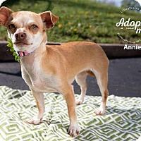 Adopt A Pet :: Annie - Shawnee Mission, KS