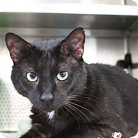 Adopt A Pet :: Coalson - Sarasota, FL