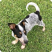 Adopt A Pet :: Chevy - Beaumont, TX