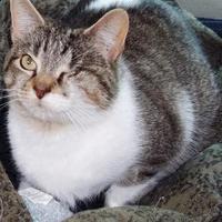 Adopt A Pet :: Zahara - Memphis, TN