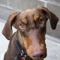 Adopt A Pet :: Theodor- AVAILABLE - Stanwood, WA