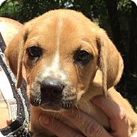 Adopt A Pet :: Mich#2M - Orlando, FL