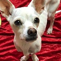 Adopt A Pet :: Snowwhite - Philadelphia, PA