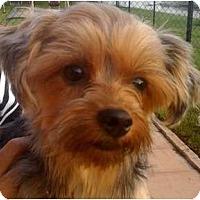 Adopt A Pet :: Breanna - Homestead, FL