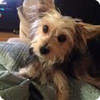 Adopt A Pet :: Bogart - Long Beach, CA