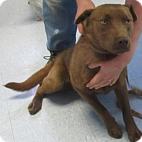 Adopt A Pet :: Otis(ADOPTED!) - Chicago, IL