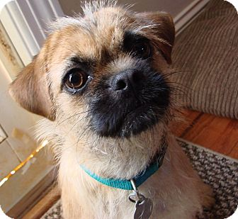 Pug/Terrier (Unknown Type, Small) Mix Dog for adoption in Homewood, Alabama - Lulu