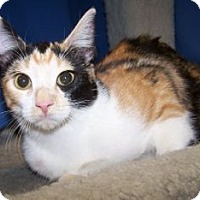 Adopt A Pet :: K-Calico-May - Colorado Springs, CO