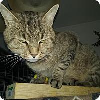 Adopt A Pet :: Henri - Delmont, PA