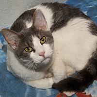 Adopt A Pet :: Frizzy - Waynesville, NC