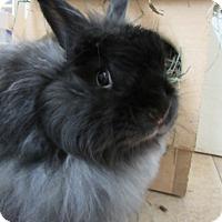 Adopt A Pet :: Prince - Newport, DE