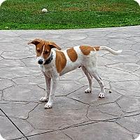 Adopt A Pet :: Chestnut - Middlesex, NJ
