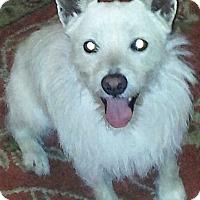 Adopt A Pet :: Zeus in San Antonio - Austin, TX