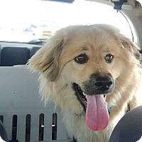 Adopt A Pet :: Laila - Edmonton, AB