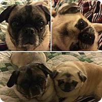 Adopt A Pet :: Mia and Jake - Doylestown, PA