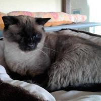 Adopt A Pet :: Keebler - Rio Rancho, NM