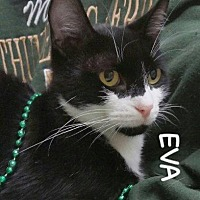 Adopt A Pet :: Eva - Fayetteville, WV