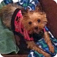 Adopt A Pet :: Desi - Greenfield, IN