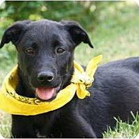 Adopt A Pet :: COOPER - Wakefield, RI