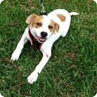 Adopt A Pet :: Patsy - Kingwood, TX