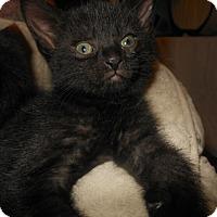 Adopt A Pet :: Malachi - Reston, VA