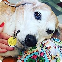 Adopt A Pet :: Smudgie - Columbia, SC
