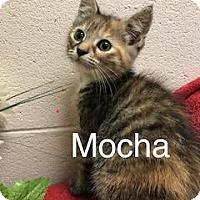 Adopt A Pet :: Mocha - Salem, WV