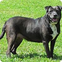 Adopt A Pet :: Dorothy - Batavia, OH