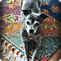 Adopt A Pet :: Queso - Tijeras, NM