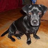Adopt A Pet :: Omar JH - Schertz, TX