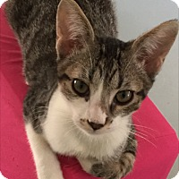 Adopt A Pet :: GERONIMO - Bakersfield, CA