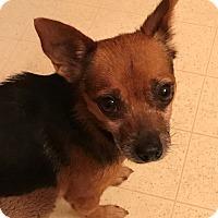 Adopt A Pet :: Mavis - Spartanburg, SC