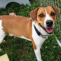 Adopt A Pet :: Tank - Rootstown, OH