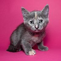 Adopt A Pet :: Rosie - Jersey City, NJ