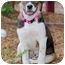 Photo 4 - Beagle Mix Puppy for adoption in Rockville, Maryland - Moonbeam