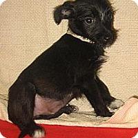 Adopt A Pet :: Allie~meet me @ PetSense~ - Westbrook, CT
