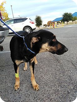 German Shepherd Dog Mix Dog for adoption in springtown, Texas - Autumn