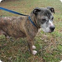 Adopt A Pet :: Paisley - Midlothian, VA