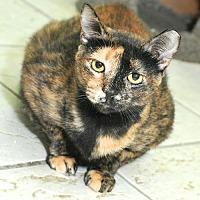 Adopt A Pet :: Cleo - St John, VI
