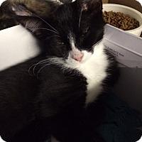 Adopt A Pet :: June Bug - Byron Center, MI