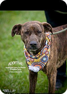 Terrier (Unknown Type, Medium) Mix Dog for adoption in Zanesville, Ohio - Bella - Urgent!