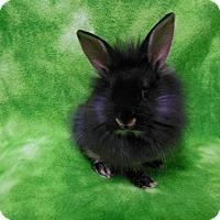 Adopt A Pet :: Talis - Scotts Valley, CA
