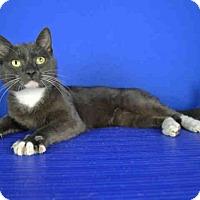 Adopt A Pet :: A029792 - Norman, OK